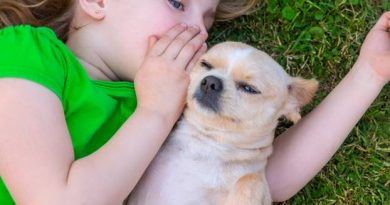 Pets for children: Which animal for my child?