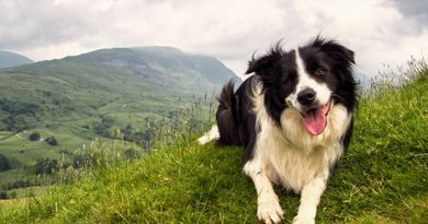 Walking with a dog: packing list and tips for the tou