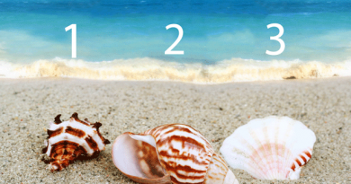 Test yourself !: Which of these shells do you like best spontaneously?